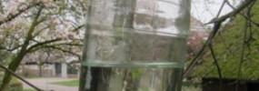 De Berk (Betula Alba)